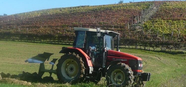 Progetto di promozione del vino piemontese